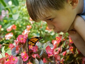 cute-boy-face-with-butterfly_w725_h544
